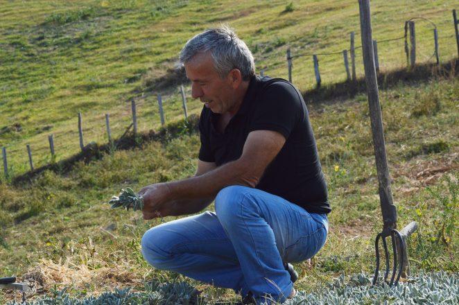 Καλλιεργητής τσαγιού του βουνού στη Βόρεια Ελλάδα